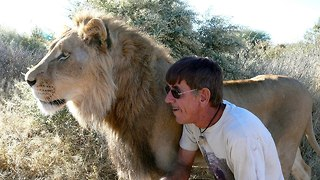 Mane Attraction: Man Cuddles and Kisses Huge Pet Lion - Video