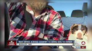 Man Drives Across Country to Bring Dog to Owner - Video