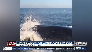 Video of whale near boat goes viral
