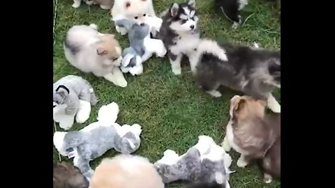 This must be what heaven looks like