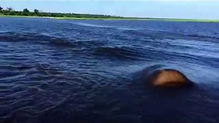 Hippo charges against boat riding on river #Scaredtodeath !! - Video