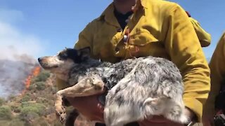 Orange County Firefighters rescued lost dog on the fire line