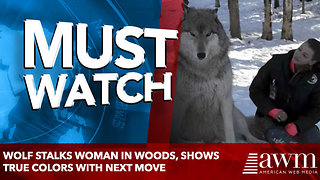 Wolf Stalks Woman In Woods, Shows True Colors With Next Move