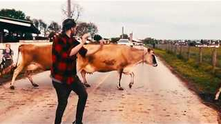Guy Shows Off His Dancing Skills in Front of Cattle - Video