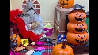 Greedy Hamster Gets Ready for Halloween