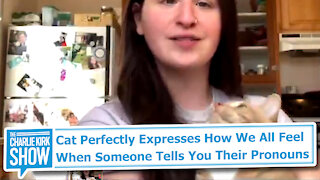 Cat Perfectly Expresses How We All Feel When Someone Tells You Their Pronouns
