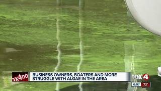 Blue-green algae moves into North Fort Myers - Video