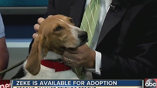 Pet of the week: Zeke is an energetic 8-month-old Hound/Trotter mix that needs a forever home - Video