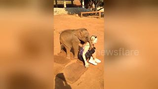 Friendly Baby Elephant Won't Let Go Of An American Tourist  - Video