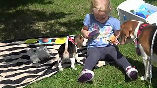 Here's why you shouldn't take dogs with you on a picnic! - Video