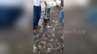 Deadly snake rescued from open well in India - Video