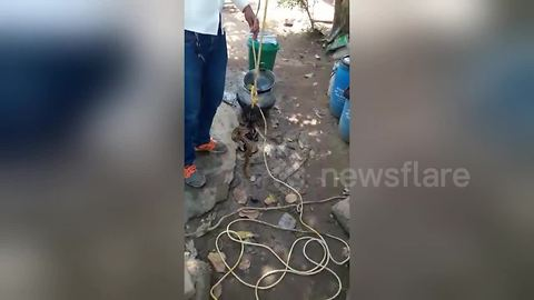 Deadly snake rescued from open well in India