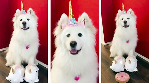 Meet the mystical unicorn dog whose dressed up by his beloved owner
