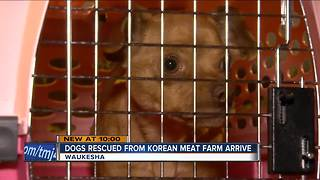 HAWS of Waukesha takes in dogs from South Korea meat farm - Video
