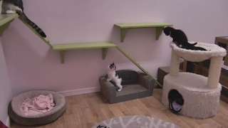 Cat, run away from kitten - Video