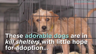 Tracy's Dogs Rescues Shelter Dogs From Euthanasia And Finds Them Forever Homes - Video