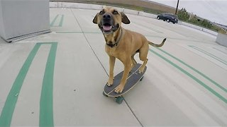 Clever Skater Pooch Bamboo Takes a Ride - Video