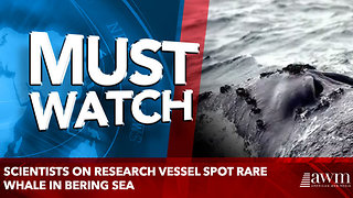 Scientists on research vessel spot rare whale in Bering Sea - Video