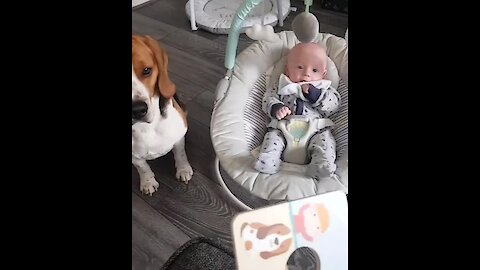 Hound dog joins baby for story time