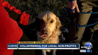 Colorado Gives Day: Golden Retriever Rescue of the Rockies - Video