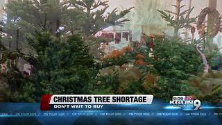 Christmas tree shortage seen nationwide - Video