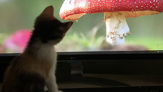 Kitten chases mouse on computer screen - Video
