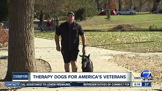 Therapy dogs for America's veterans