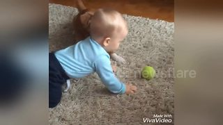 Too cute! Dog and baby play ball - Video
