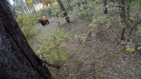Brave Biker Manages To Outrun Wild Bear