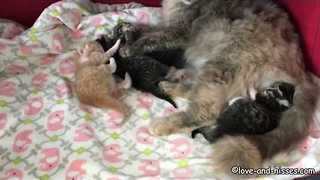 Newborn Kittens Hang Out With Momma in Cuteness Overload - Video