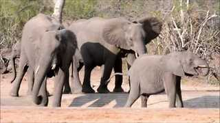 Southern Africa Drought Deeply Impacts Kruger Park Animals - Video