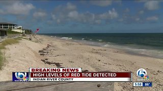 High levels of red tide detected in Indian River County