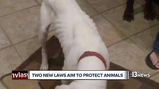 Two new laws to protect Nevada animals go into effect Oct. 1 - Video