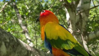 Learn why your pet bird should go outside daily