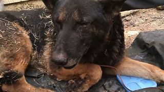 Volunteer Team Rescues Dog Affected By California Fires