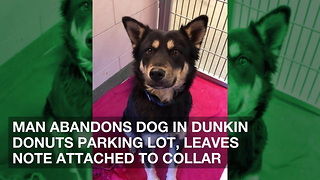 Man Abandons Dog in Dunkin Donuts Parking Lot, Leaves Note Attached to Collar - Video