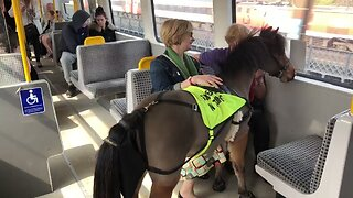 UK's First Ever Guide Horse Rides Newcastle Metro on Training Day