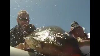 Spanish Police Rescue Turtle With 'Breathing and Buoyancy' Issues
