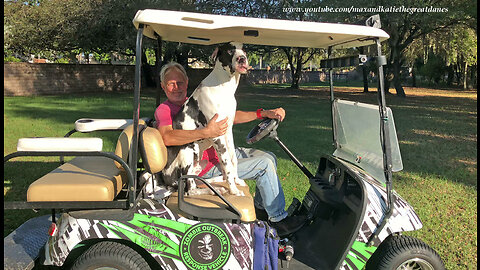 Funny 7 Month Old Great Dane Puppy Goes For a Golf Cart Ride