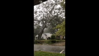 Tree Falls on a House in Athens, Georgia - Video