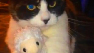 Cat becomes extremely protective of favorite stuffed animal - Video