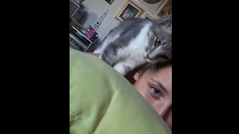 Overly-attached kitten demands owner's affection