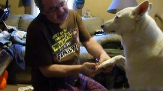 Good doggy calmly enjoys manicure from owner - Video
