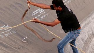 Terrifying moment snake rescuer risks own life to save cobra - Video