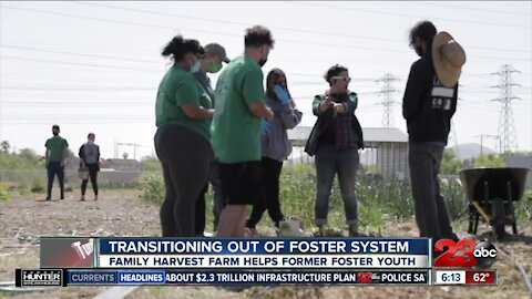 Family Harvest Farm helps former foster youth transition out of the foster system