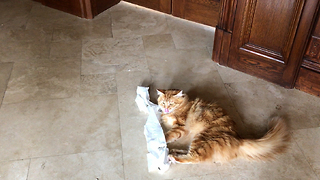 Jack the Cat Attacks the Toilet Paper Roll