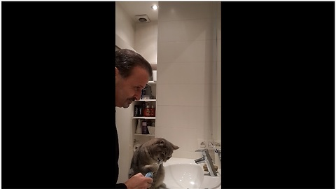 Hygienic cat uses electric toothbrush every morning
