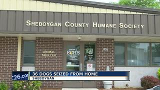 36 dogs removed from Town of Wilson home after animal welfare investigation - Video