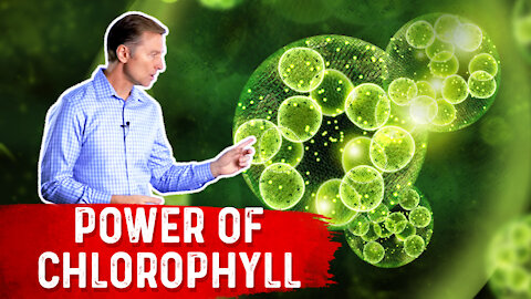 The Power of Chlorophyll for the Gut