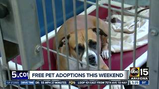 Free pet adoptions in the Valley this weekend